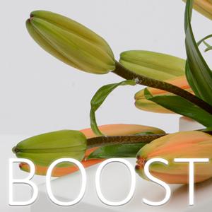 boost-mersalg-smykker-westpack